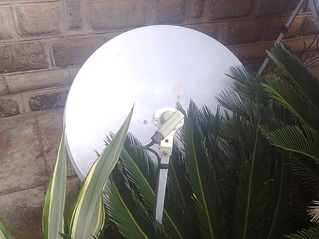 Make Sure Vegetation Does Not Cover Your Satellite Dish